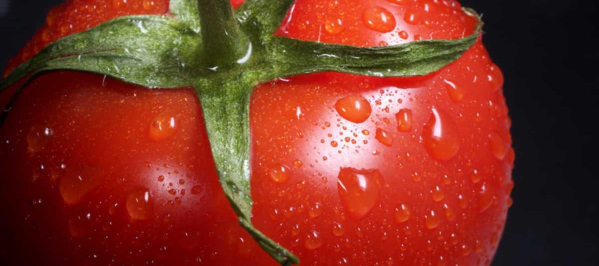 tomato close up
